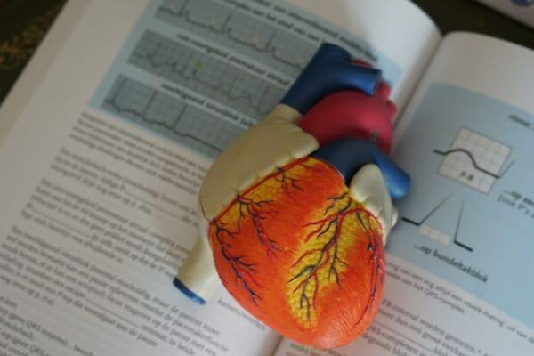 自律神経によってコントロールされている心臓の拍動は自分の意思ではコントトールすることができないことを説明するための心臓のイメージ