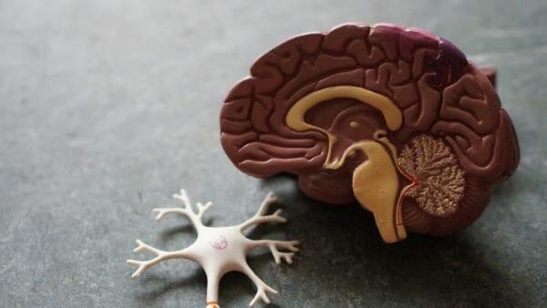 血管を通る血液によってエネルギーを循環させている脳のイメージ