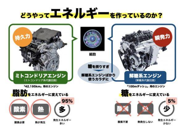 解糖系エンジンとミトコンドリアエンジンの違いを説明する図