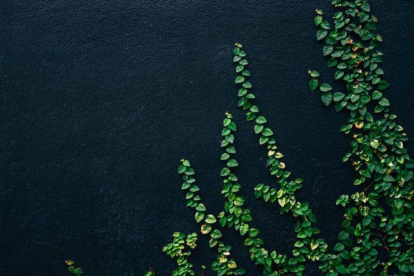 交感神経から副交感神経に切り替え、ストレスを緩和させる緑のイメージ