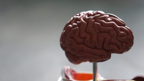 頭を動かすために糖がほしいと命令してきている脳のイメージ